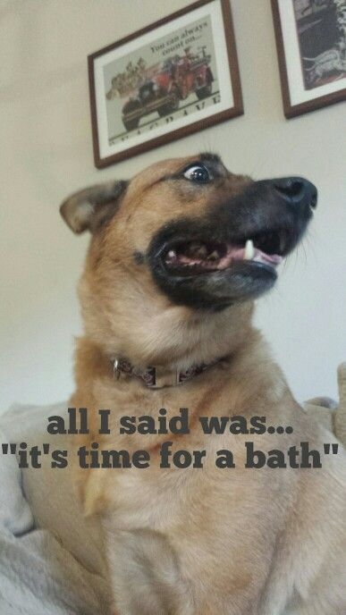 how to give a german shepherd a bath