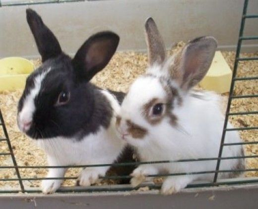 26 best house rabbits images on pinterest house rabbit Make your own bunny house