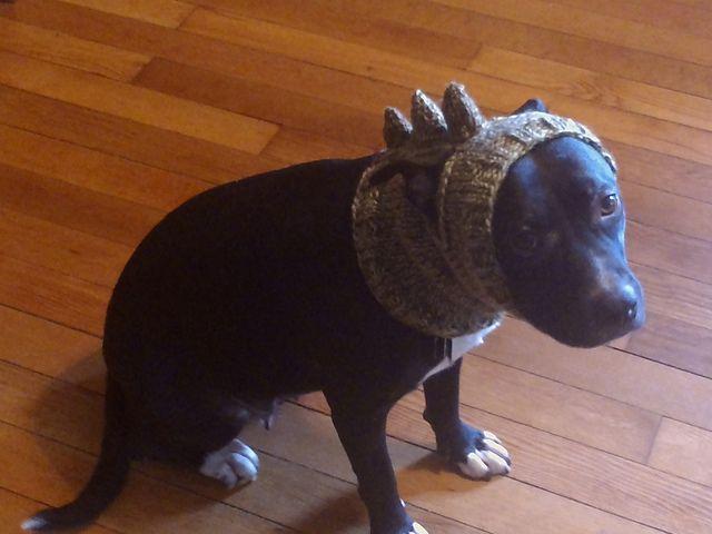 19 Best Knitting For Dogs Images On Pinterest Dog Clothing