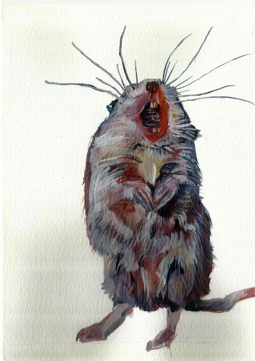 'Gaapmuis' Watercolour on paper 21 x 15 cm