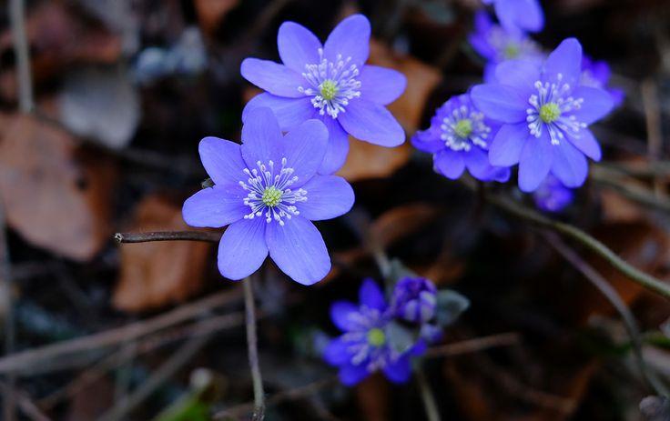 Wiosna w Ogrodzie Botanicznym UW | Spring at the Warsaw University Botanical Garden.