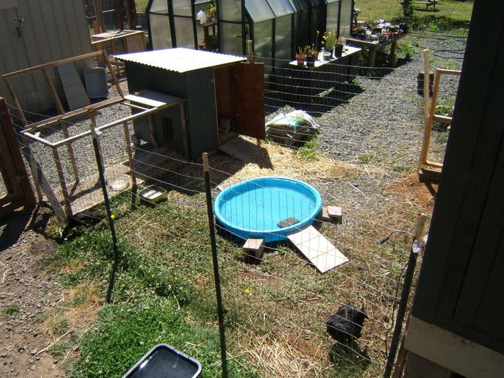We eventually moved the pool inside the duck pen so they for Duck hutch ideas