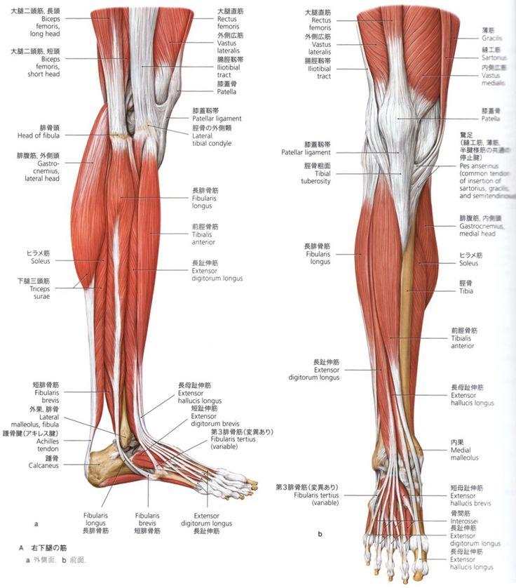 その5 足の解剖学   毎日かたこり。3.0                                                       …