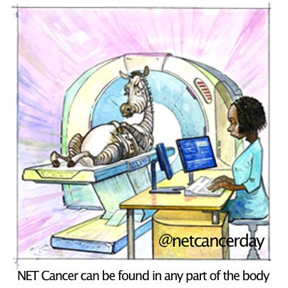 NET Cancer Day because - Unlike other cancers that are located in a specific organ NET Cancer can be found in any part of the body. Neuroendocrine tumors are derived from neuroendocrine tissue that is found in many different organs, tumors can be found in any part of the body.  http://endocrinediseases.org/neuroendocrine/