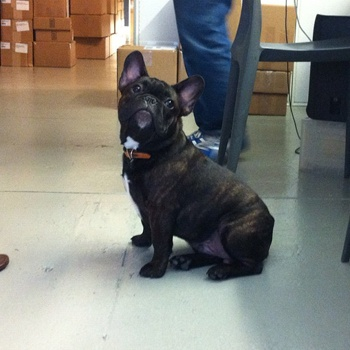 The office has a visitor this morning!: Snuggle, The Office, Offices, Product Hounds, Things I D, Mornings, Visitor