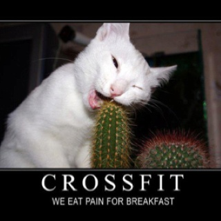 this is cross fit.: Cats, Funny Pics, Funny Pictures, Funny Cat, Crazy Cat, Funnies, Funny Animal, Animal Funny, Chuck Norris