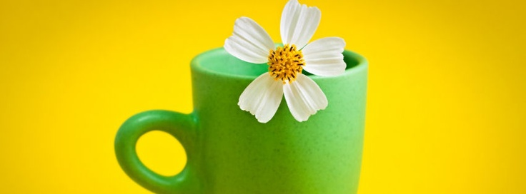 Flower cup facebook covers | Flower cup hd fb cover photos | Flower cup covers for timeline profile