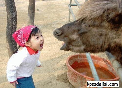 En Komik Resimlerden komik resimler, güldüren fotoğraflar, en komik fotoğraflar, ilginç fotoğraf, komik foto, komik hayvan, komik bebek resimleri, dünyanın en komik resmi benzeri konulardaki en komik resimleri ni sizler için derledik, birbirinden komik resimlere aşağıdan ulaşabilirsiniz. #komik #funny  Kpss Delisi Kaynak Linki : http://kpssdelisi.com/en-komik-resimler/