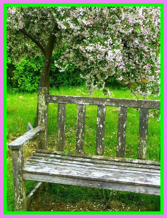 82 Reference Of Bench Photography Background In 2020 Background For Photography Bench Garden Bench