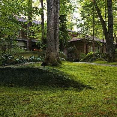 For a shady property, moss is an excellent no-mow grass substitute. It grows in almost any soil and requires minimal weeding, watering, and fertilizing. Mixing together several varieties will provide a changing collage of color throughout the season.