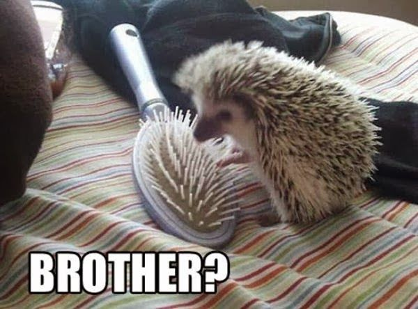Funny animal pictures of hedgehog and brush.