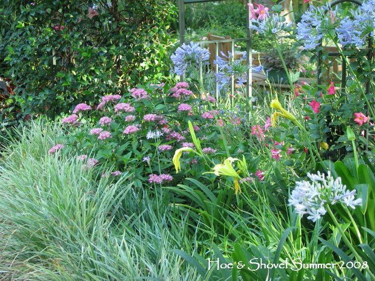 58 best florida natives for cottage gardens images on pinterest