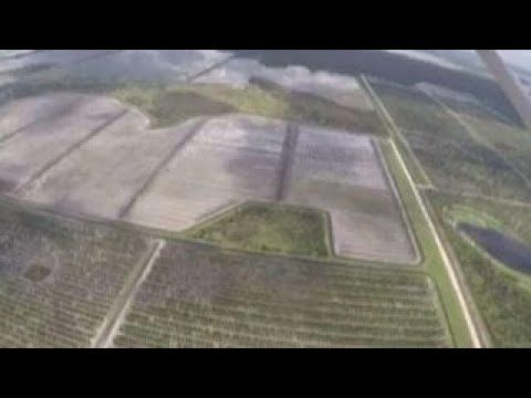 Hurricane Irma hits Florida's agriculture industry - YouTube