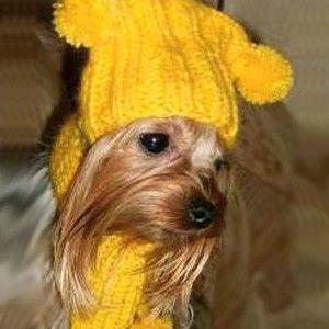 """8. ШАПОЧКИ И БОТИНОЧКИ - вязание для собак и кошек , свитера, кофты, попоны для собак, комбинезоны, шапочки, обувь для собак, скачать бесплатно книгу Корин Ниснер """"Вяжем для четвероногих модников"""", needleworkdogss Jimdo-Page!"""