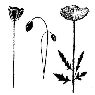 Lavinia Stamps - Clear Stamp - Group Poppies,$14.99