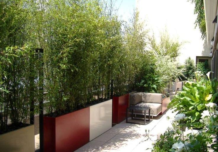 sichtschutz-balkon-bambuspflanzen-pflanzkuebel-gross-klare-farben-sitzmoebel
