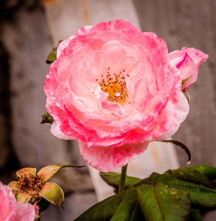 blossom - Newham