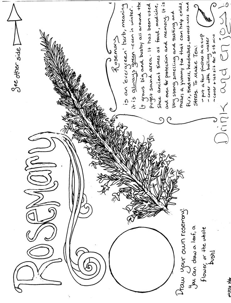 herbs coloring pages - photo#23
