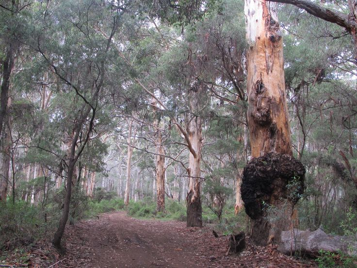 Explore and discover the true world of travel with the help of a professional Travel & Adventure Coach from Carry On Wandering #adventuretravel #traveltips #adventurecoach #travelcoach #travel #travelcompanion #austrailia #capetocape #hike #tree #forest