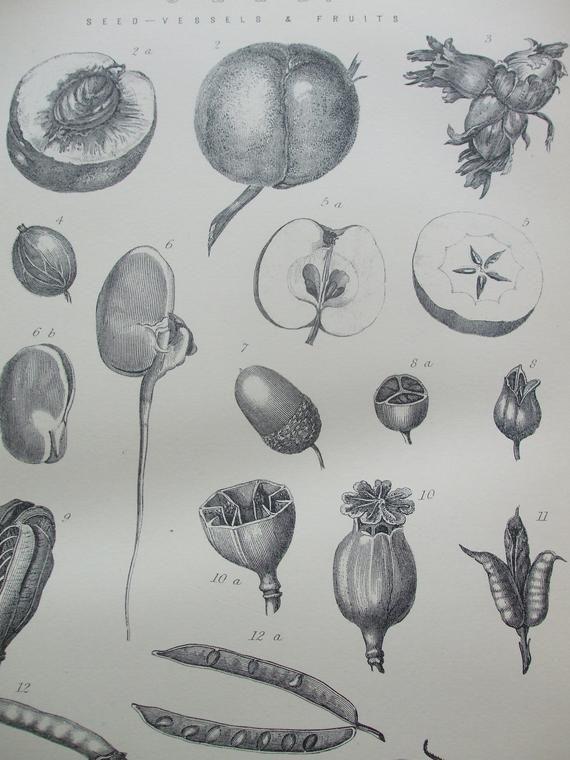 WILLIAM SHAKESPEARE Antique Print c1870