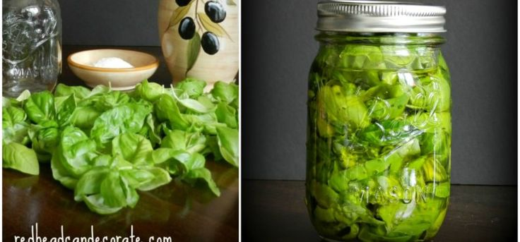 Basil   Ingenious Trick for Preserving Fresh Basil for a Year or More. Clean your basil thoroughly in cold water, then allow it to air dry completely. Sprinkle some salt in the bottom of a clean glass jar (with a lid). Then, add in some basil to the jar followed by some olive oil. Repeat in layers (salt, then basil, then olive oil) until your container is full or your fun out of basil. Be sure that you press down to covered all of the basil with olive oil. Put the lid on the containers and…