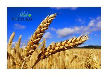 Agenţia pentru Finanțarea Investițiilor Rurale (AFIR) informează căMinisterul Agriculturii şi Dezvoltării Rurale (MADR), în calitate de Autoritate d