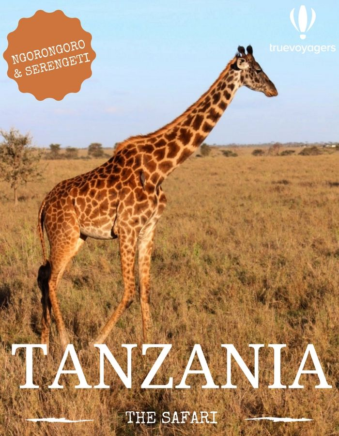 Tanzanian Safari: Discovering Serengeti Park and Ngorongoro Crater