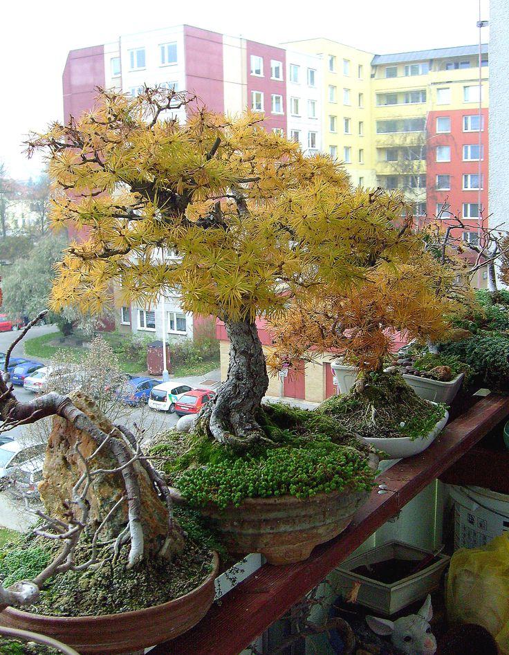 podzimní modříny mezi paneláky - R.Kaiserová
