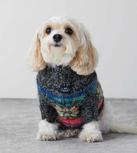 American Beagle Outfitters Fair Isle Sweater - Love this! I want it for my puppy!