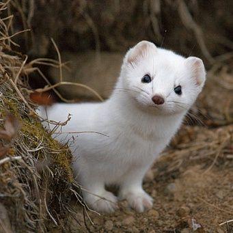 Вымирающие виды животных в России