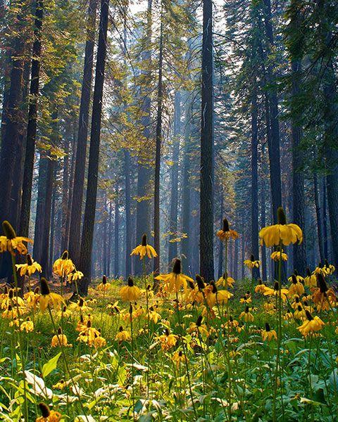 Spring Flowers Yosemite National Park