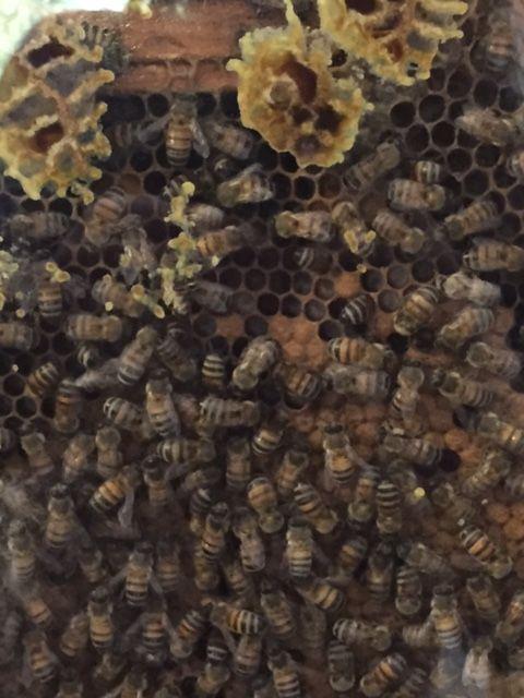 Observation hive shot
