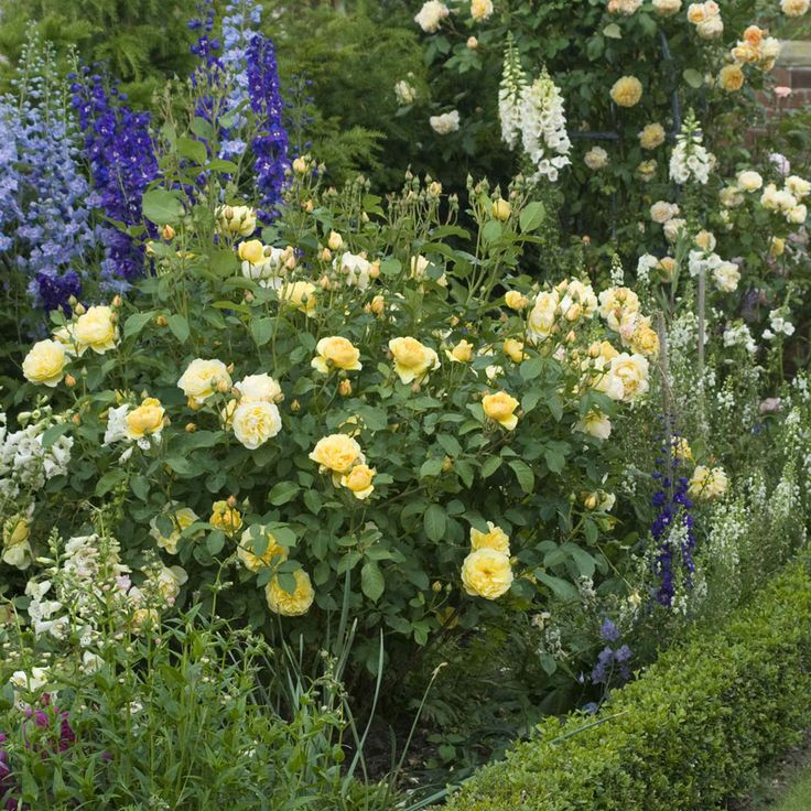 17 best images about torr solig rabatt on pinterest | raised beds, Garten Ideen