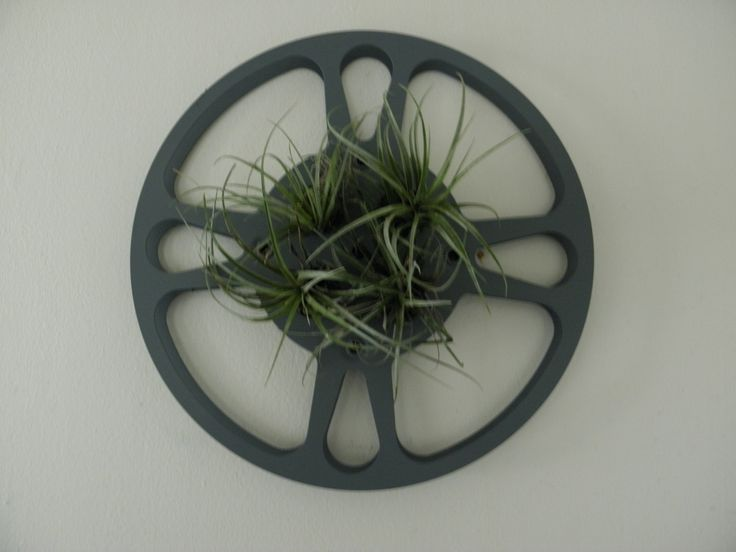 A personal favorite from my Etsy shop https://www.etsy.com/listing/484045009/4-air-plants-in-vintage-16mm-film-reel