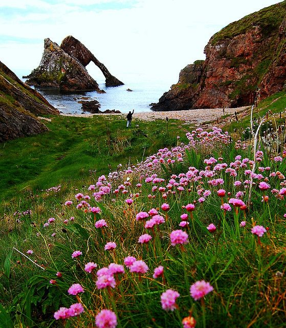 Moray Coast, ScotlandFiddle Rocks, Scotland, Buckets Lists, Moray Coast, Bows Fiddle, Beautiful, Places I D, Travel, Honeymoons Destinations