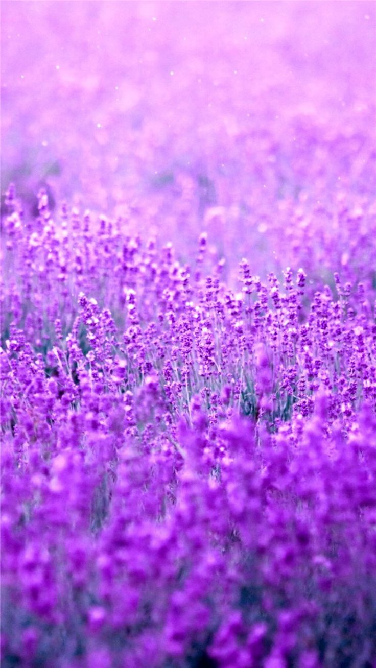 1000 ideas about purple wallpaper iphone on pinterest - Purple iphone wallpaper ...