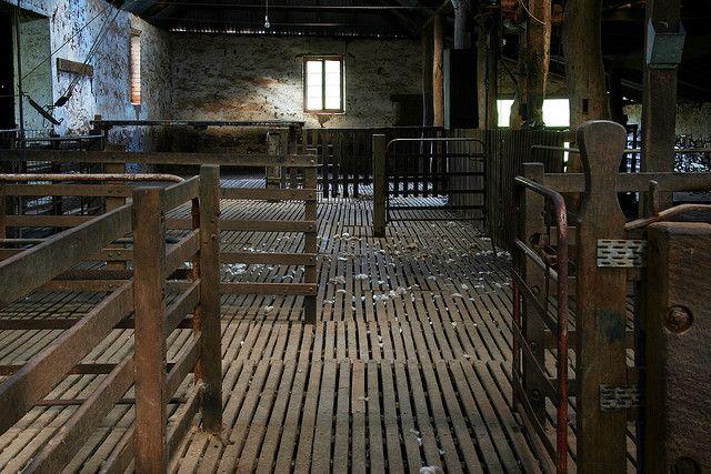 1850's shearing shed