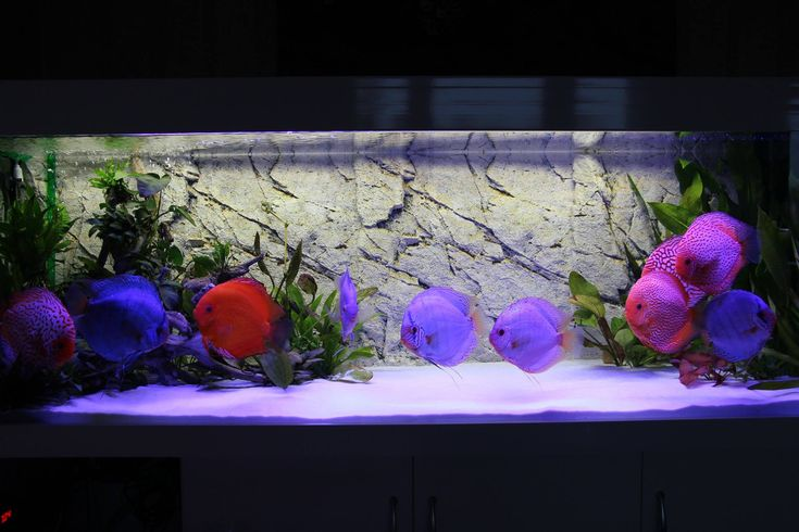 Diskusfische aus dem Diskuskeller