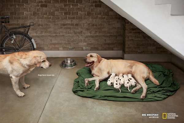 "National geographic Channel. ""The Dog Whisperer."" Dogs have issues too..."