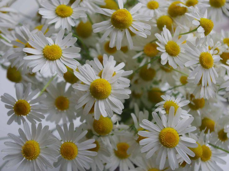 https://flic.kr/s/aHskh5H1ws | Flowers