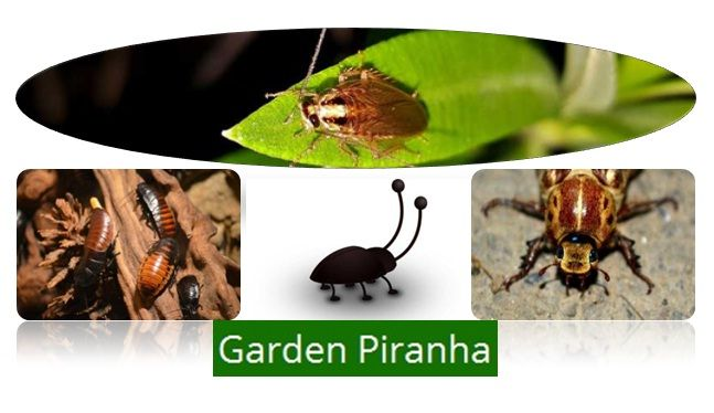 Top Roach & Cockroach Killer Guide  If you're fed up of roaches and cockroaches, this guide is for you.  See more at http://www.gardenpiranha.com/garden/pest-control/best-roach-cockroach-killer