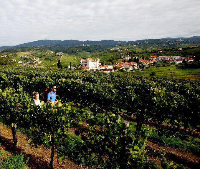 Top 5 wandelroutes in #Slovenië  http://mijnslovenie.com/top-wandelingen/   #wandelen #wijngaarden #kastelen #groen #vakantie #reizen #Slovenië / @MijnsLOVEnie / www.mijnslovenie.com