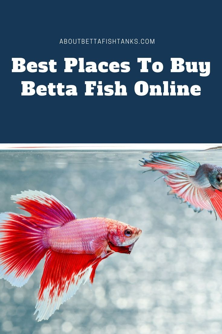 The Best Places To Find Betta Fish For Sale Online In 2020 Betta Fish Betta Fish Toys Betta Fish Care