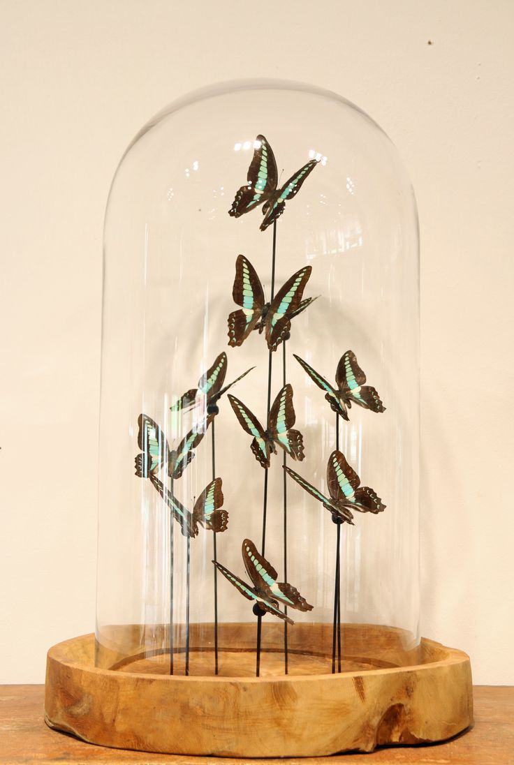 Glass dome with butteflies