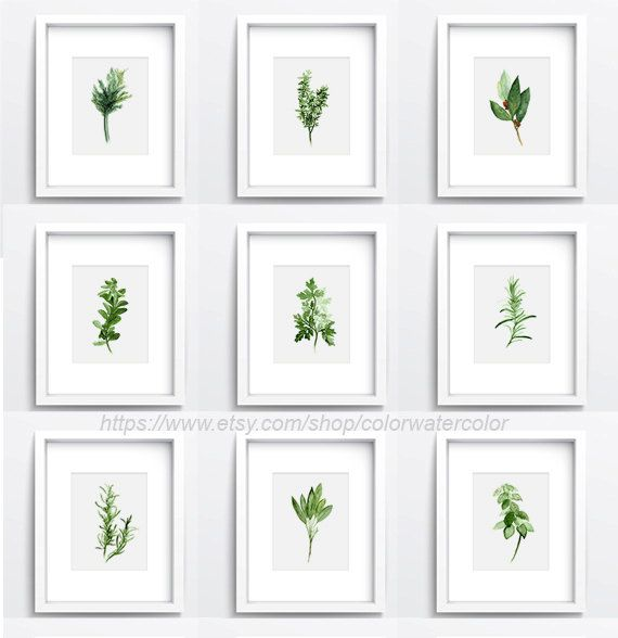 Set of 9, Herbs And Spices, Kitchen Decor, Herb Chart, Botanical Print, Plant…
