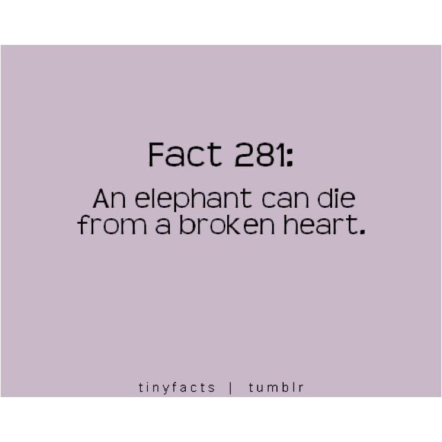 : Sad Faces, Elephants Favorite, Bama Fans, Awesome, Some People, Elephants Love, Awwww, So Sad, Animal