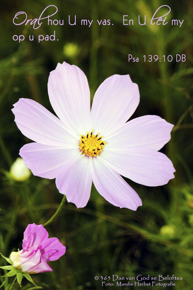 Dag 13 Bybelvers: Psalm 139:10 (Die Boodskap) Oral hou U my vas. En U lei my op u pad.