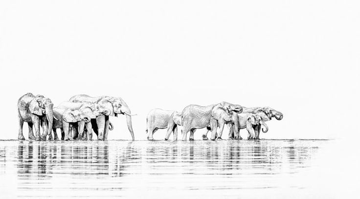 Elephant herd drinking in BW wildlife panoramic print. Wall art by wildlife photographer Dave Hamman