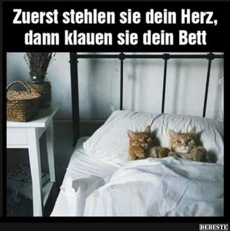 Beste Bilder, Videos und Sprüche und es gibt täglich neue lustige Facebook …  – Katzen
