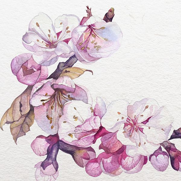 Sakura | Watercolor on Behance